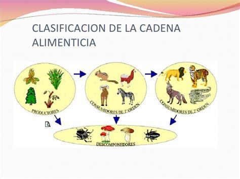 cadena alimenticia acuatica en ingles cadena alimenticia