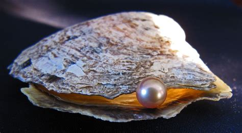 oyster shell pearl and oyster shell picture by athousandwords for