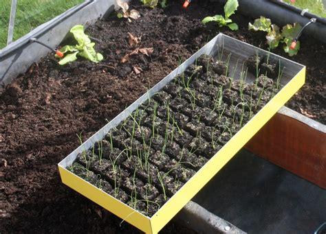 seme spagna semer des carottes page 2 au jardin forum de jardinage