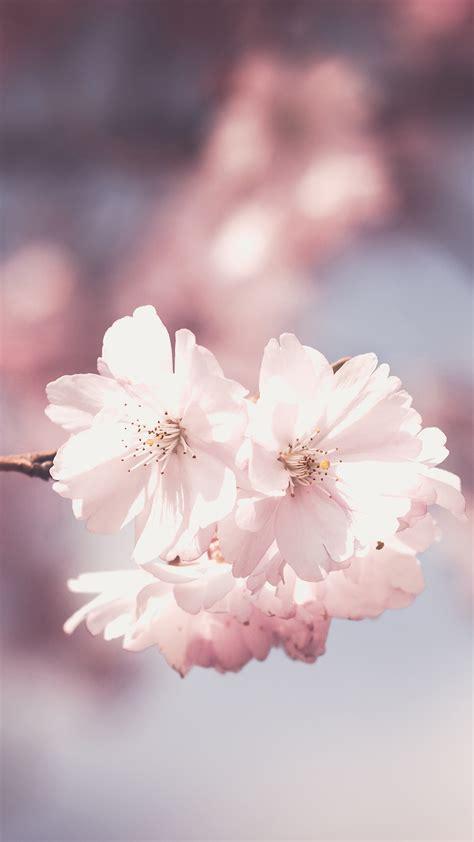 pink flowers hd wallpaper   mobile phone