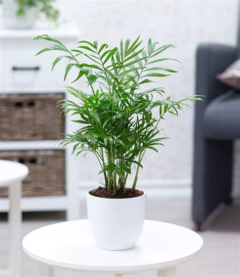 zimmerpflanzen halbschatten zimmerpflanzen mix fresh air zimmerpflanzen a z bei
