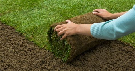 should you plant seed or install sod on that new lawn my gardening network