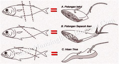 pasang umpan  mancing kumpulan teknik mancing ikan