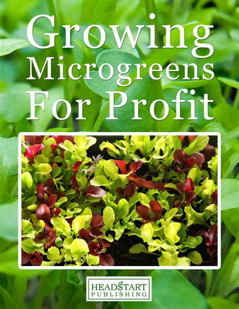 MICROGREENS   Profitable Plants Digest