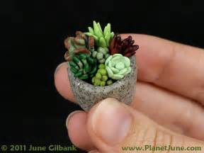 polymer clay succulent garden flickr photo sharing
