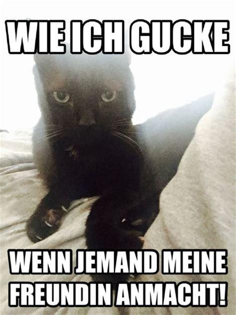 Katzen Meme - 14 besten katzen memes bilder auf pinterest katzen