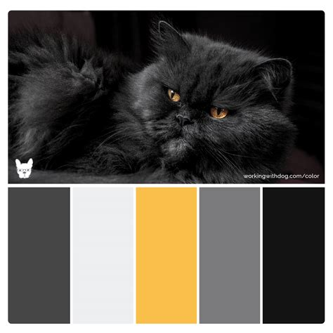 luxury color palette color palettes for pet brands