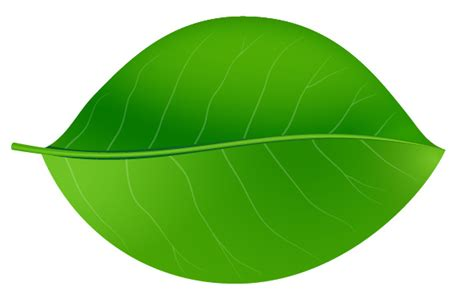vector leaf tutorial how to create realistic vector leaves in illustrator