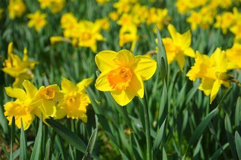 immagini di fiori gialli fiori gialli per un matrimonio solare i pi 249 belli per il