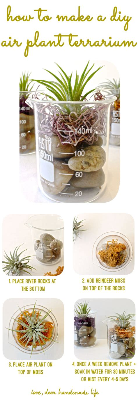 how to make a diy air plant terrarium dear handmade life