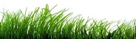 gambar rumput format png makassar photography rumput dan alang alang