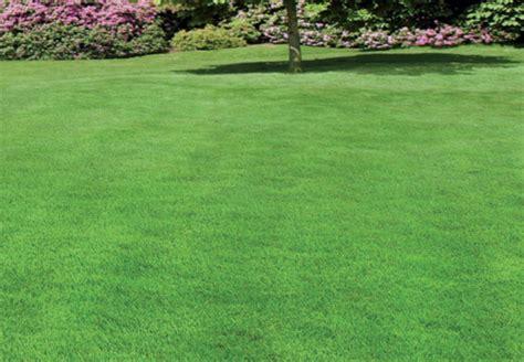 Rasen Ohne Mãƒâ Hen Wann Rasen D 252 Ngen Rasen D Ngen Im Fr Hjahr Vertikutieren