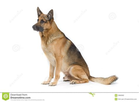 puppy sitter sitting stock photography image 2866082