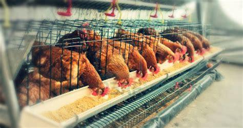 forrajes el barrio sa de cv alimento  aves