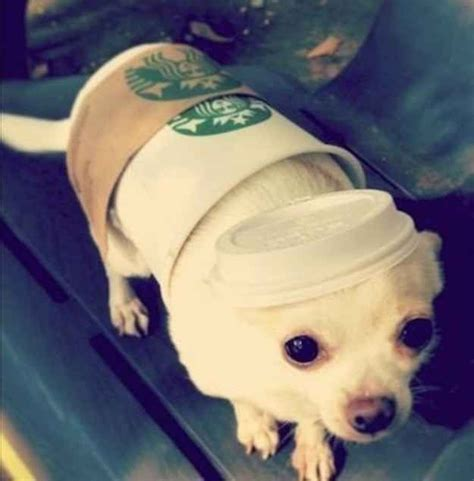 pin  dog costumes