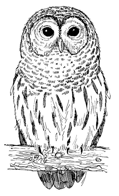 OWLS PICTURES, PICS, IMAGES AND PHOTOS FOR YOUR TATTOO