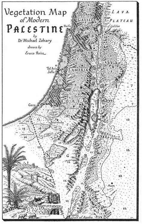 pattern analysis vegetation erwin raisz s vegetation map of modern palestine
