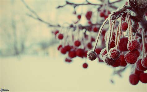 Gamis Frozen Lnice 7 12thn gefrorene kirschen