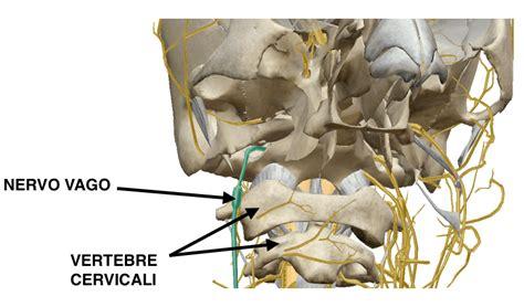 cervicali e giramenti di testa vertigini e giramenti di testa quando il problema 232