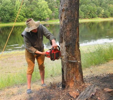 how to cut a tree how to cut a tree diy chainsaw tree care yard