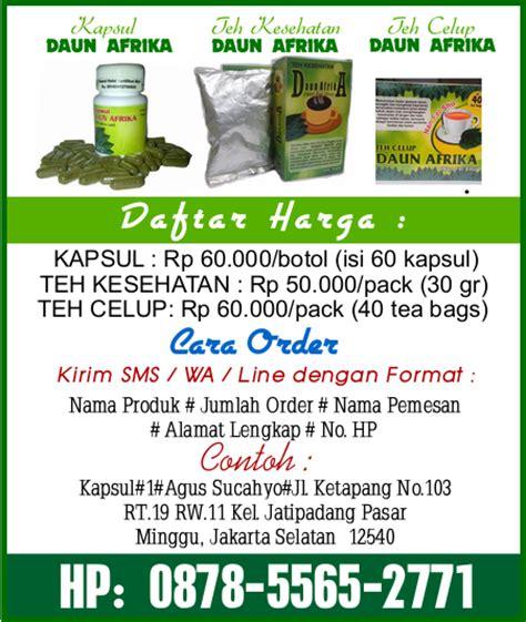 Teh Daun Afrika Teh Herbal Teh Daun Afrika Kering Obat Herbal 1 daun afrika selatan pengobatan herbal diabetes hipertensi kolesterol dan asam urat