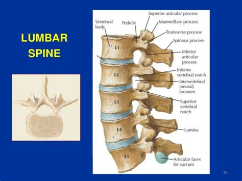 spine l for x ray spine