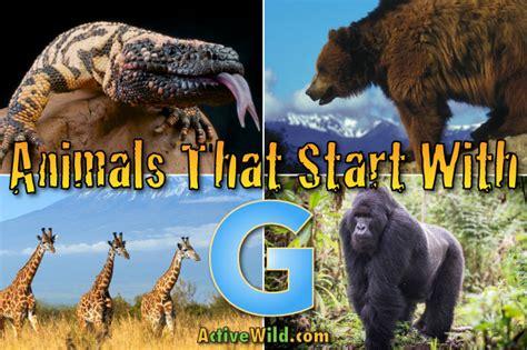 animals that start with u list of amazing animals animals that start with g list of amazing animals