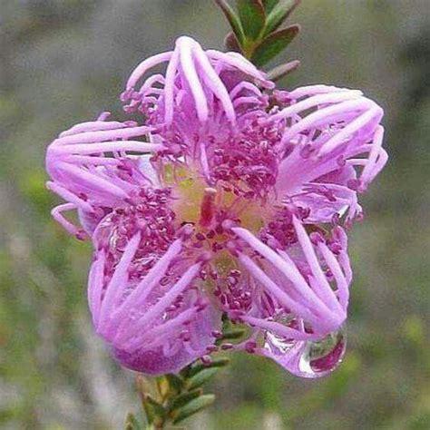 unusual flowers 25 best ideas about unusual flowers on pinterest