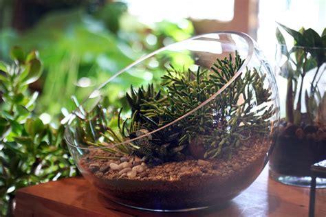 Houseplant For Low Light by Top Ten Low Light Terrarium Plants Pistils Nursery