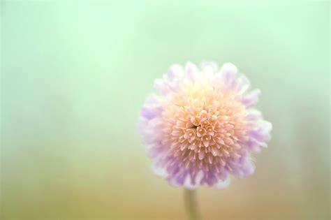 light purple flowers image flowers in bloom green light purple flower by pohlmannmark on deviantart