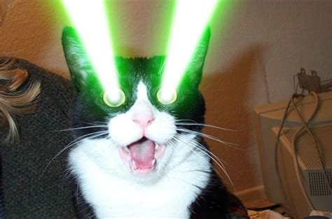 Laser Cat Meme - 1000 images about destroy then with lazers on pinterest