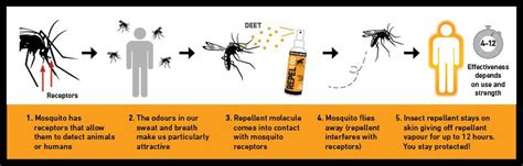 insect repellent guide expert advice