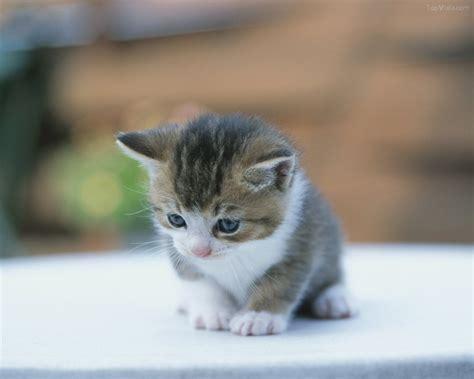 cute cat photo foto kucing lucu idda