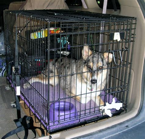 how to crate a puppy crate