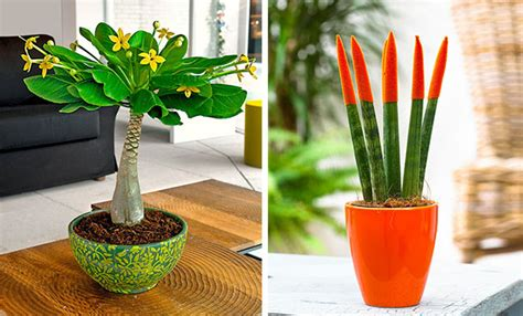 pianta da appartamento pianta da appartamento quale scegliere idee green