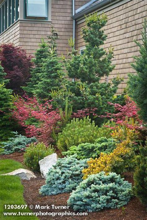 Landscaping Ideas Evergreen Shrubs Best 25 Evergreen Garden Ideas On Evergreen