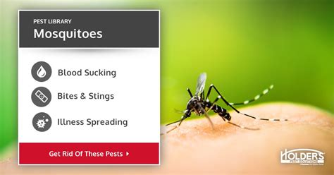 mosquitos types facts    identify mosquito