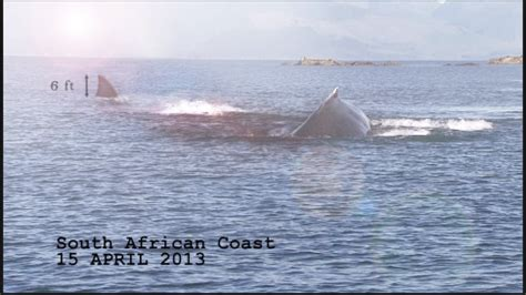 whale boat sinks submarine shark attack 2014 jumping the shark george monbiot
