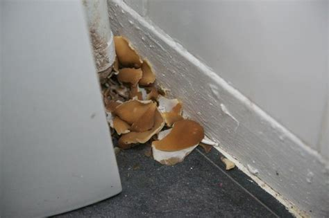 bathroom fungus dangerous darvel family find potentially harmful mushrooms growing