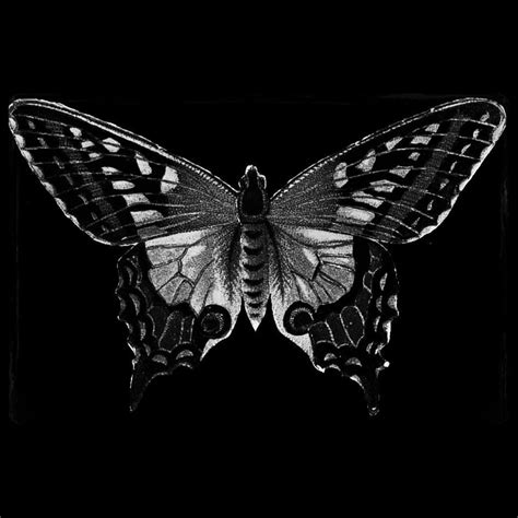 black butterfly the black butterfly tbb chester twitter