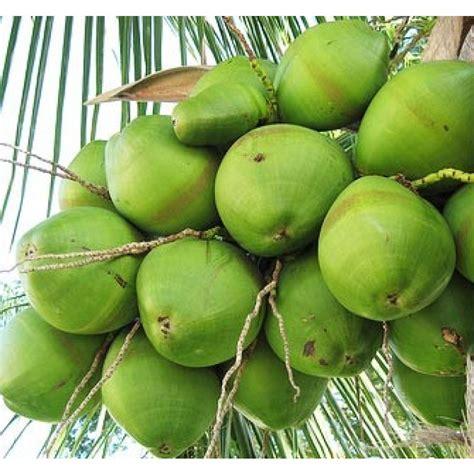 green coconut florida coconuts store