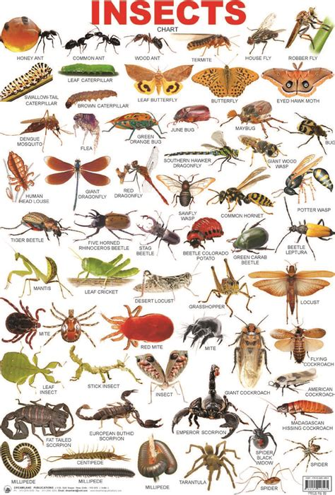 insectanatomy free insect animal pictures gallery image result for insects grade school unit masterpiece