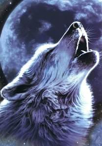 celebrating the seasons january full moon full wolf moon full old moon full cold moon