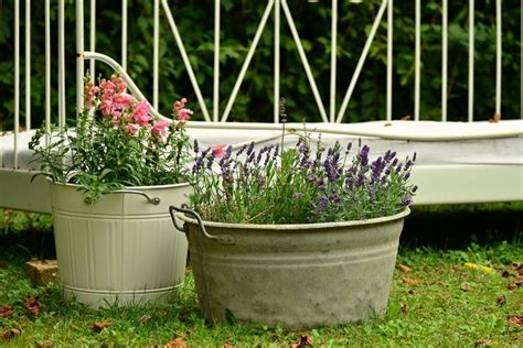 organic container gardening for beginners beginner container gardening tips home and garden america