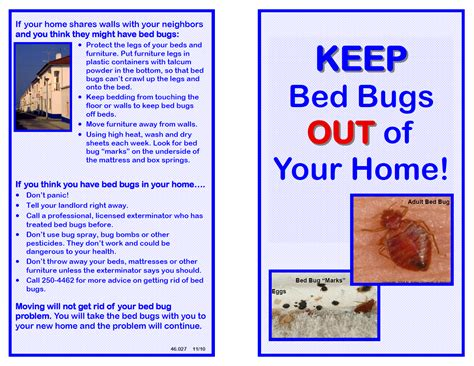 how to get bed bugs out of your bed how to get bed bugs out of your bed 28 images how to get rid of bed bug bites on