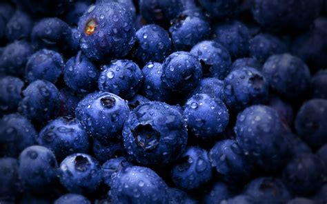 blueberry wallpaper blueberry wallpapers 2560x1600 736491