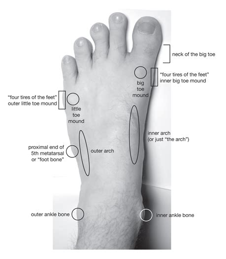 sections of the foot parts of the feet and ankles technique by witold fitz