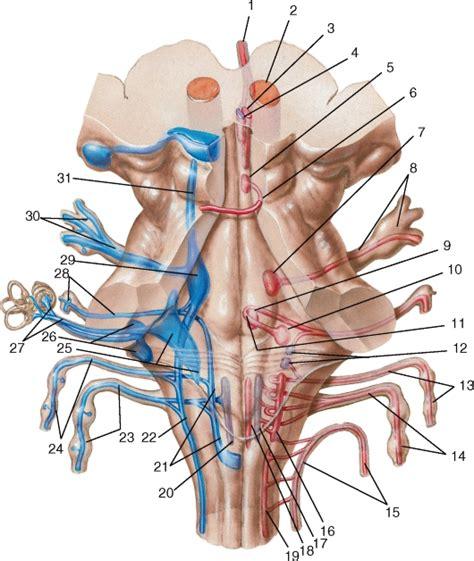 Черепно-Мозговые нервы и область иннервации таблица
