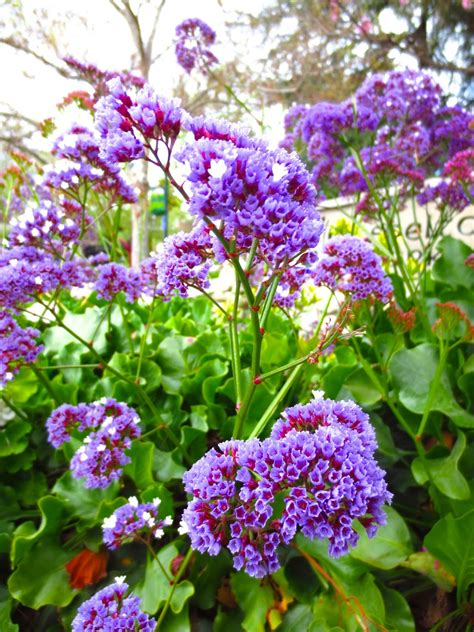 plant with purple flowers spring blooms in my home town cococozy