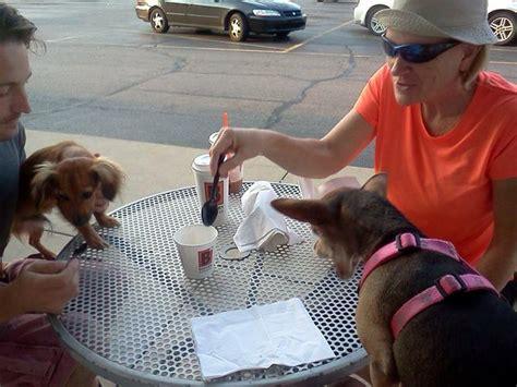 sheboygan humane society golden retrievers http y94 blogs pets 146 lizard likes belly rubbed